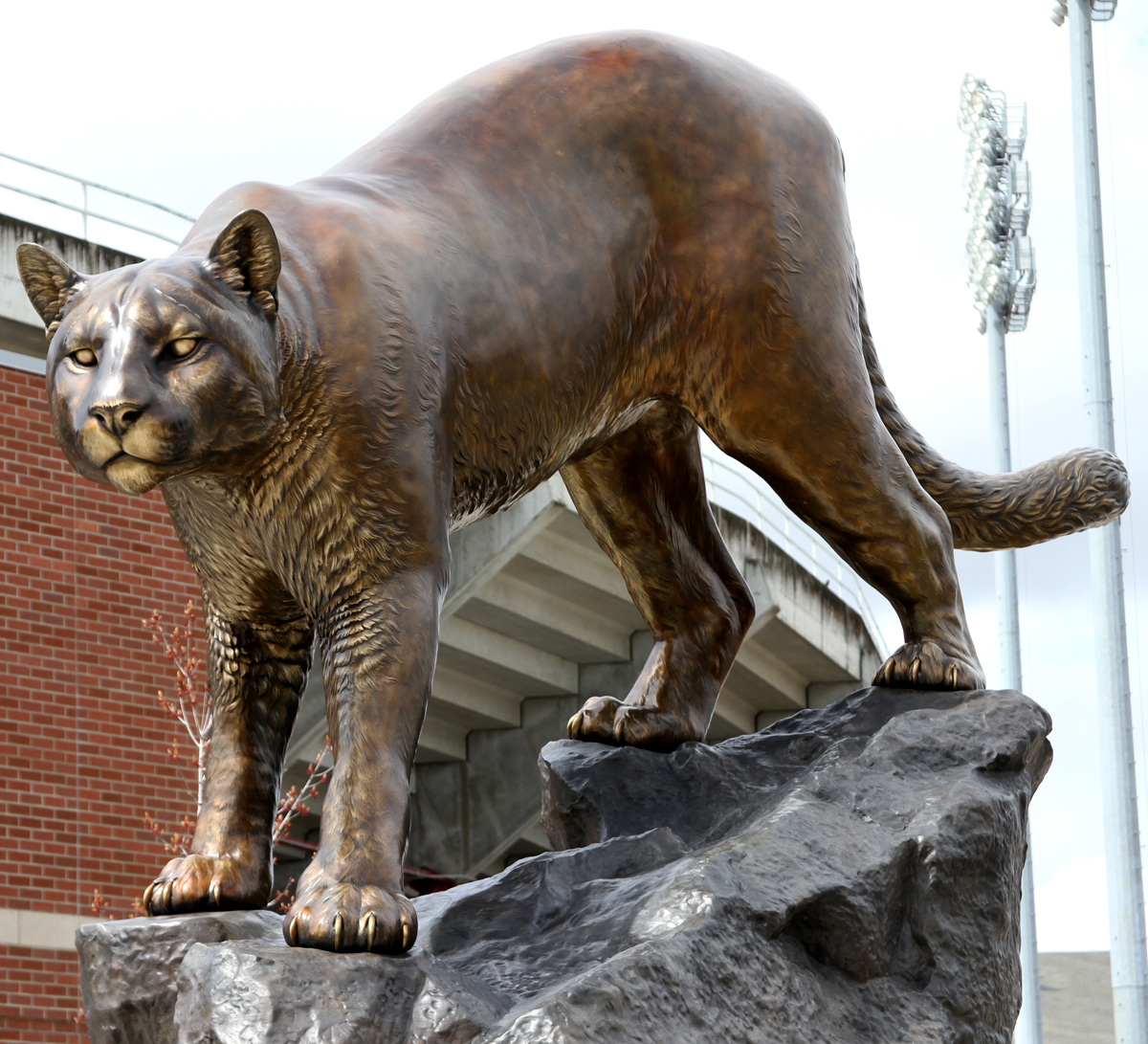 Washington-State-University-Mascot-Monument-Bronze-Wildcat